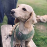 testimonial dog